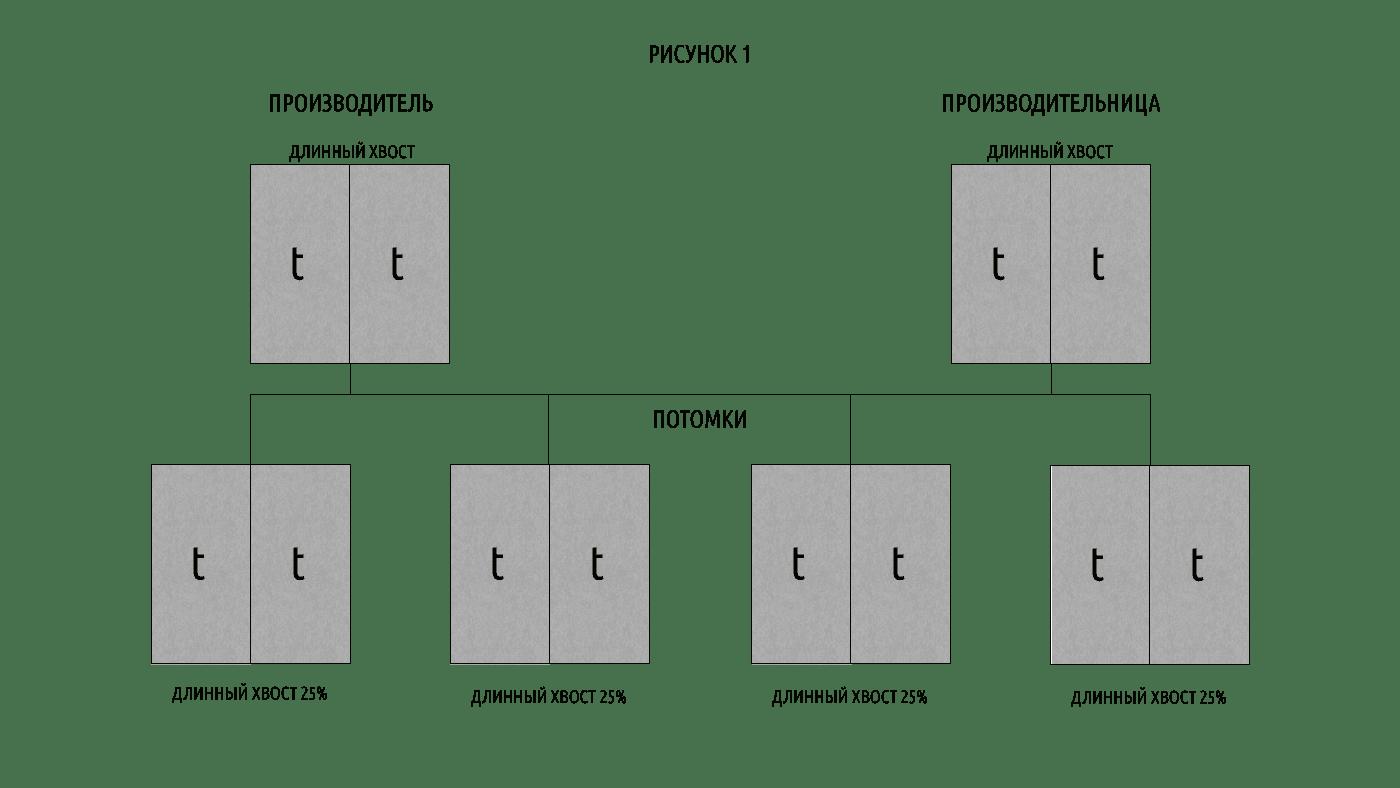 Таблица 1 ген куцего хвоста