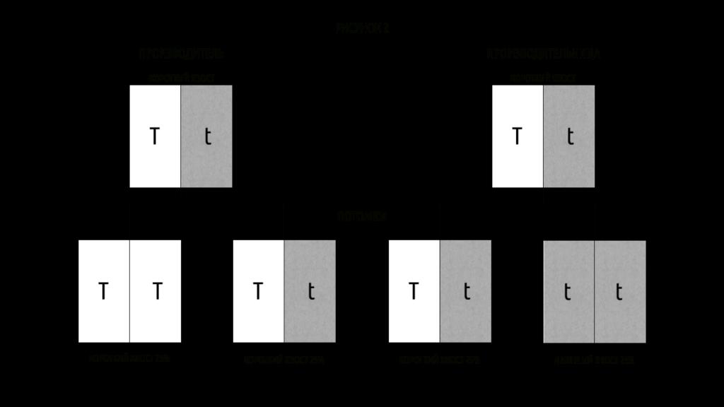 Таблица 2 ген куцего хвоста