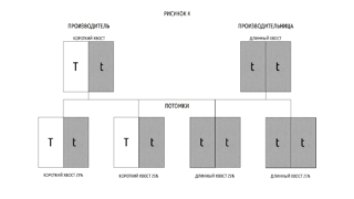 Таблица 4 ген куцего хвоста